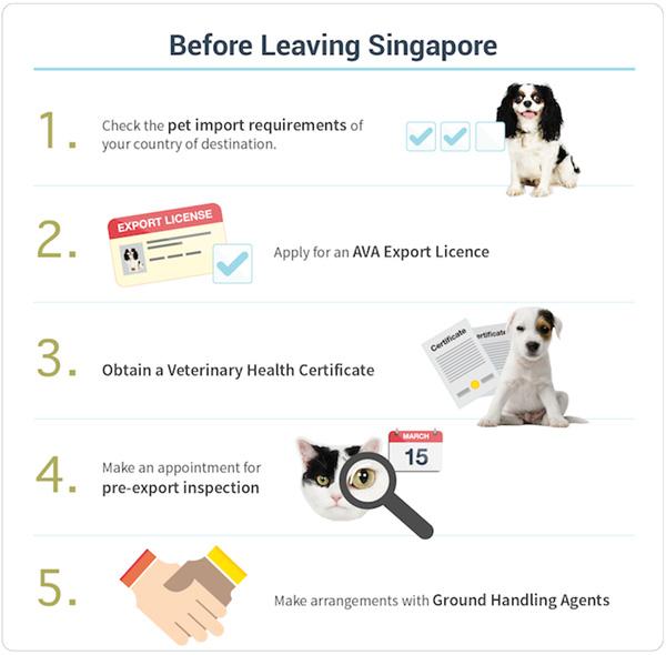 Import Dog From Singapore To Australia