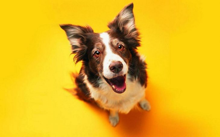 10 Fun, Frivolous Things to Get for Your Dog