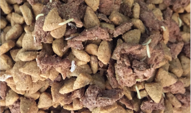 Bugs in dog food featured