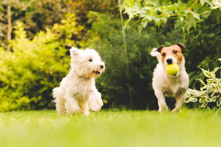 two dogs in dog run