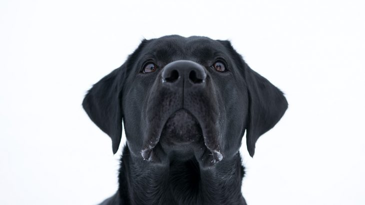 understanding your dog feature