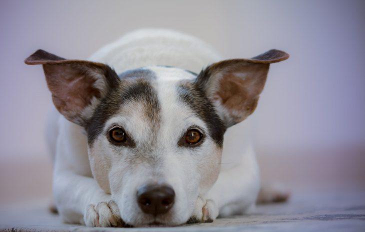 dog myths feature